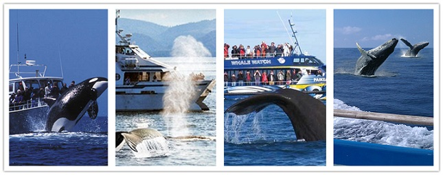 wonder travel|Whale Watching 1 day - $29.99