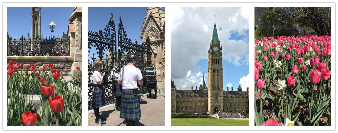wonder travel|Special Ottawa Tulip Festival 1 day $9.99+